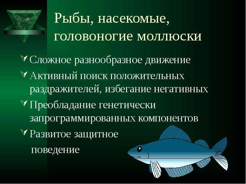 Рыбы, насекомые, головоногие моллюски Сложное разнообразное движение Активный поиск положительных ра