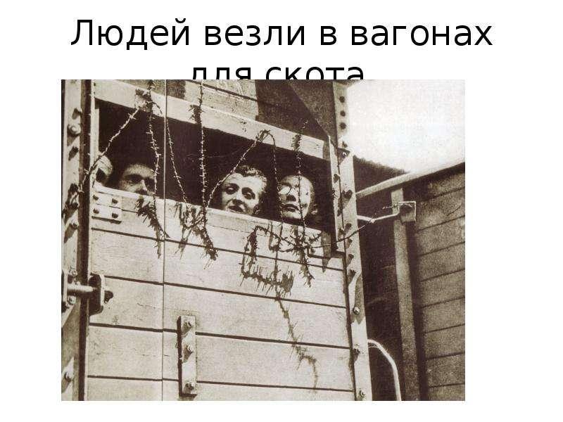 Людей везли в вагонах для скота