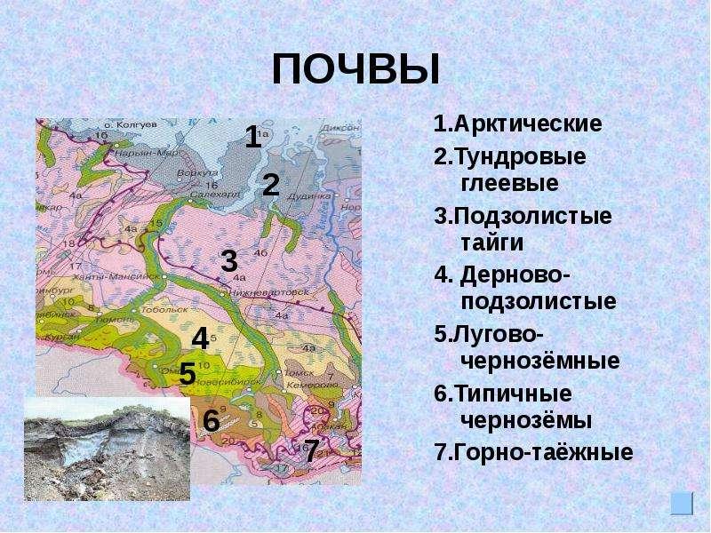 Почему в восточной сибири почвы тайги не подзолистые а таежно мерзлотные