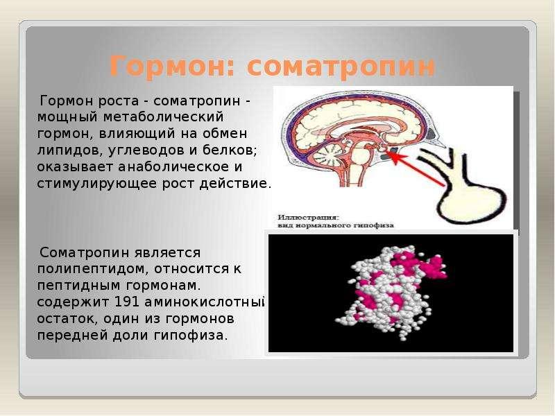 foto-strapon-v-anale-devushki