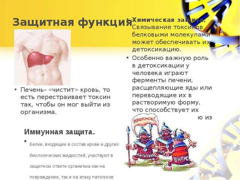 Как очищать кровь в домашних условиях