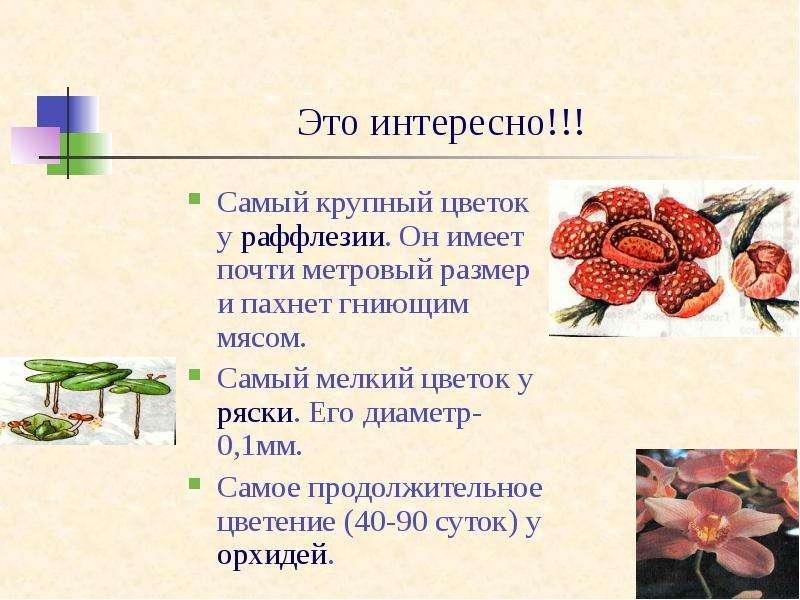 Информация о цветах и их