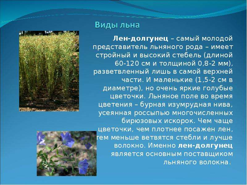 Особенности выращивания льна-долгунца 84
