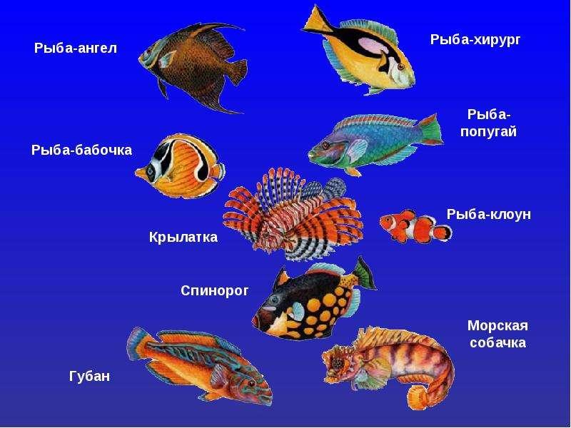 летучая рыба столь чудесно попавшаяся к двум смертельно голодным ответы