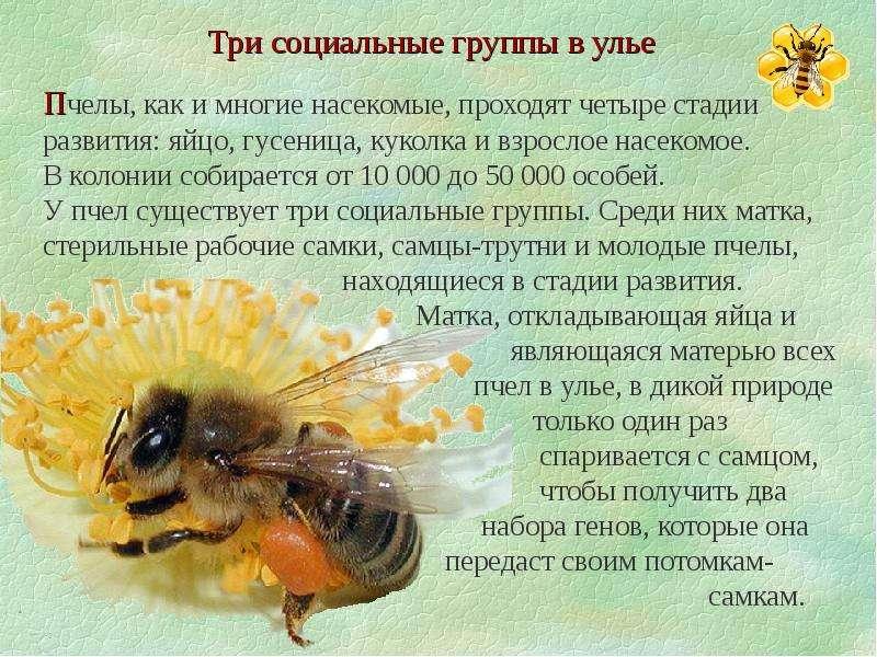 интересные картинки про пчел кто-то ставил