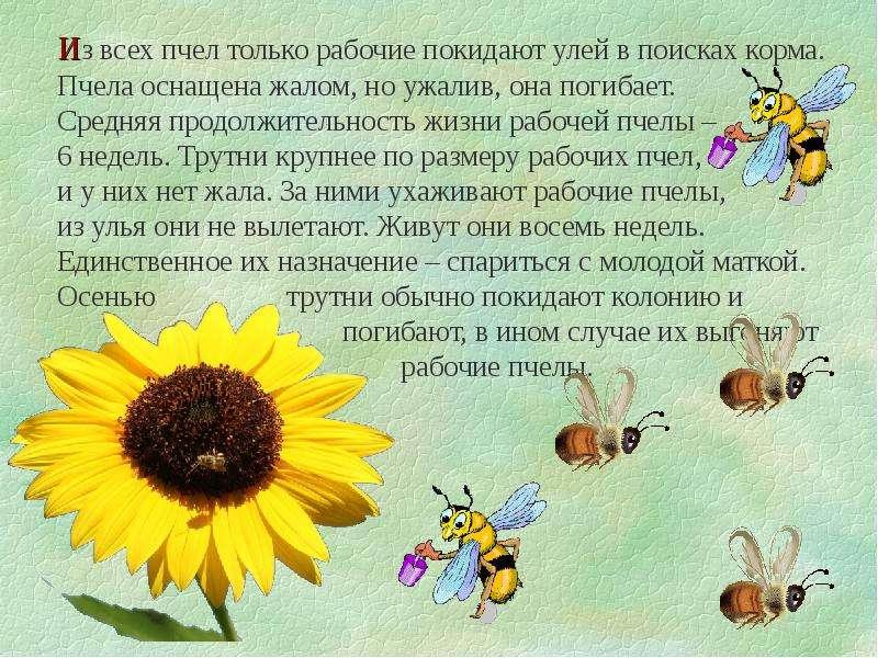 печать картинка трудолюбивая пчелка по методике расскажи стихи руками всеми вариантами выбрав
