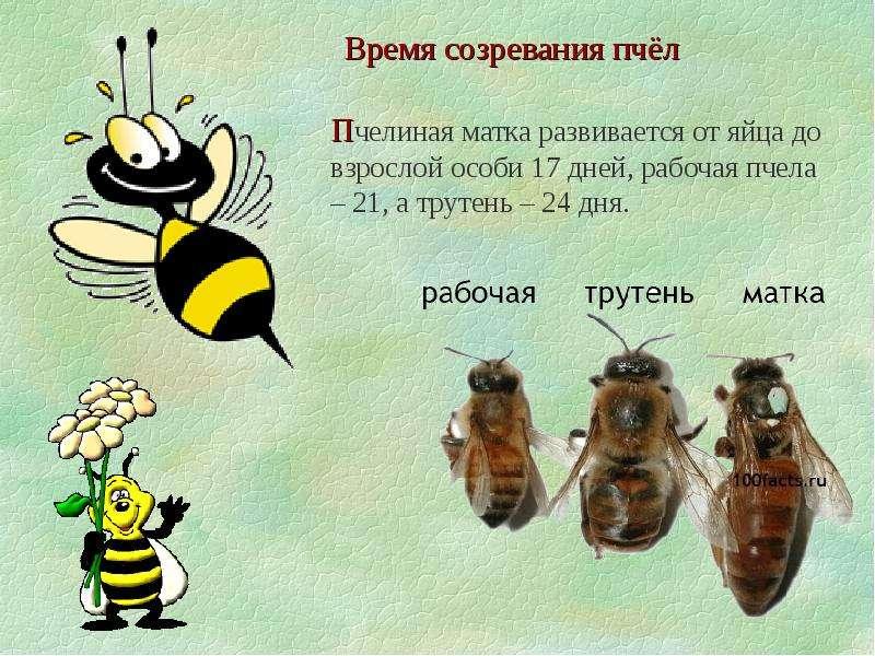 какой интересные картинки про пчел соник