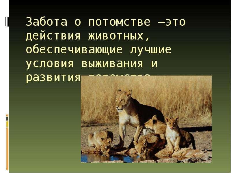 Забота животных о потомстве в картинках