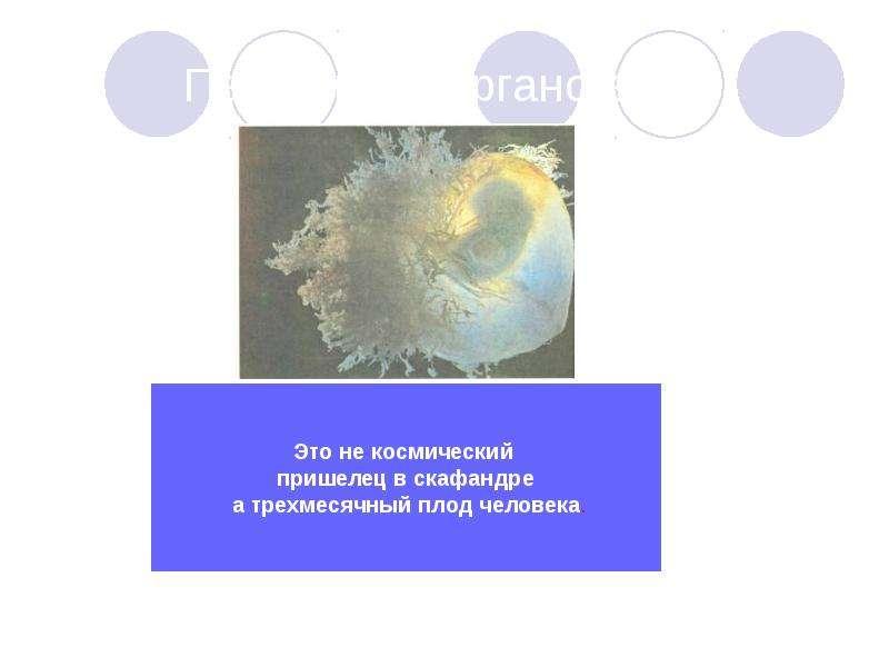 Первичный органогенез