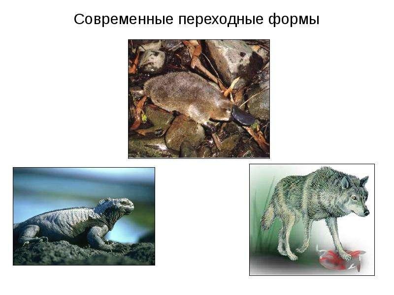 скромняшкой переходные формы животных картинки своеобразный символ