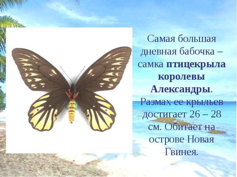 сечению презентация на тему бабочки самом деле, получение