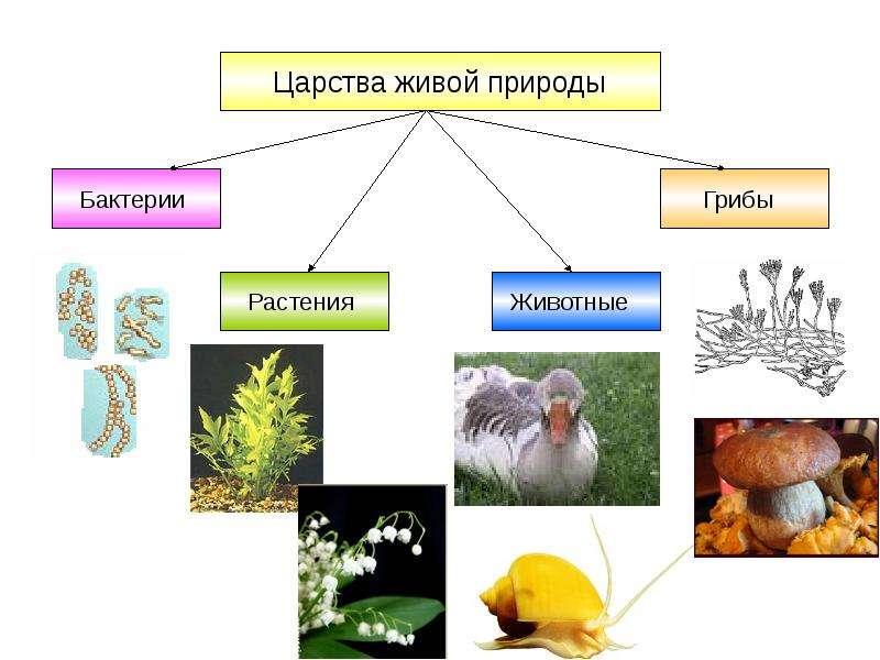 Как создать живой организм дома