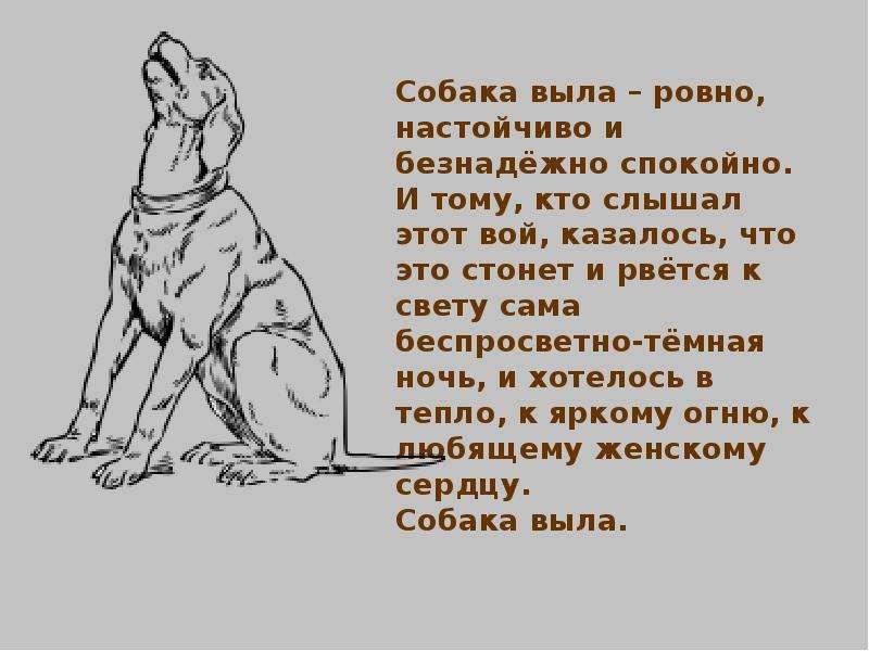 хороших к чему воют собаки ночью на улице приметы рецепт фото поможет