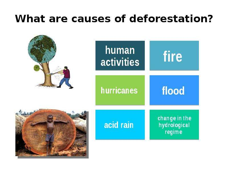 causes ans effects of deforesation in