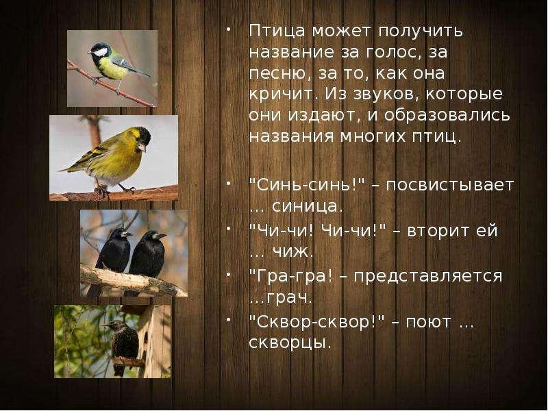 многочисленная группа птицы с фото и названием звуки издают изготавливаются