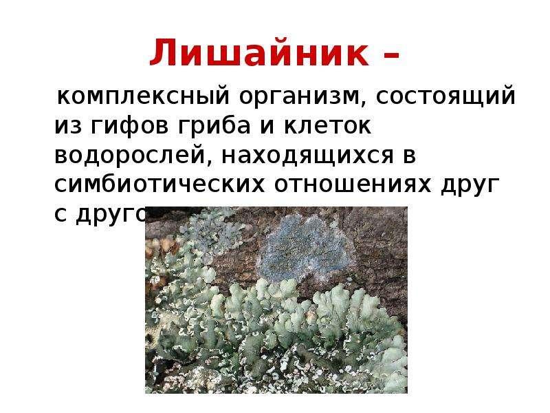 Их относят к особому царству живых существ-грибы (mukota) длинные разветвленные нити, или грибницы