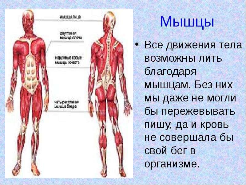 Непроизвольные сокращения мышц по всему телу