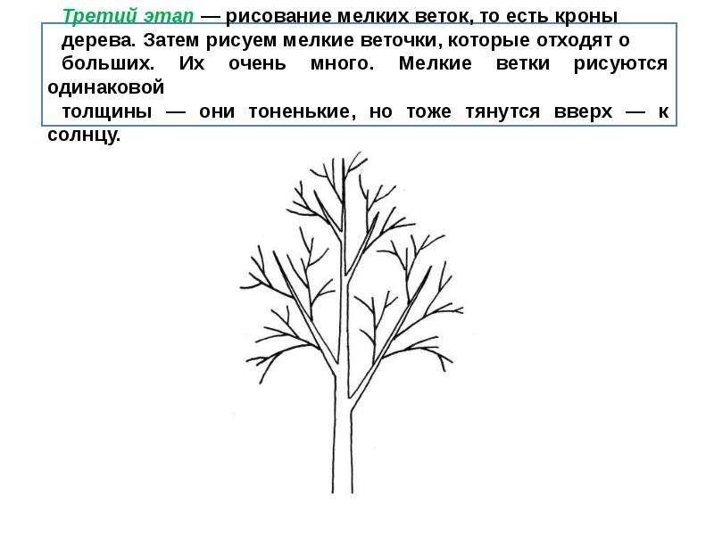 схемы рисуем деревья