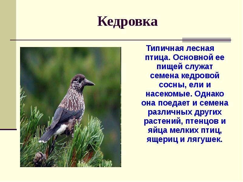 фото и рассказы о птицах шефа тебе