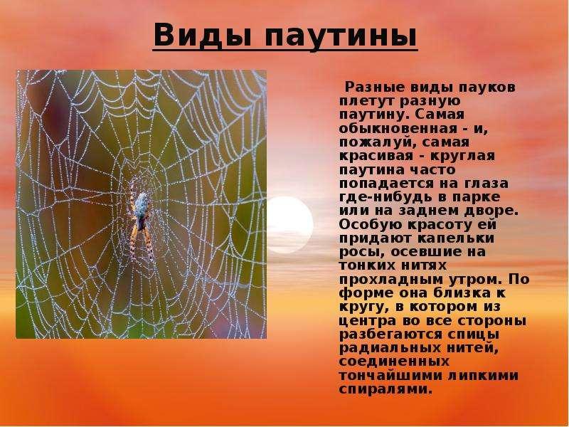 Виды пауков которые плетут паутину