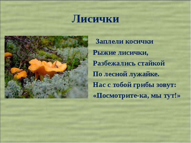 Презентация про лисичку