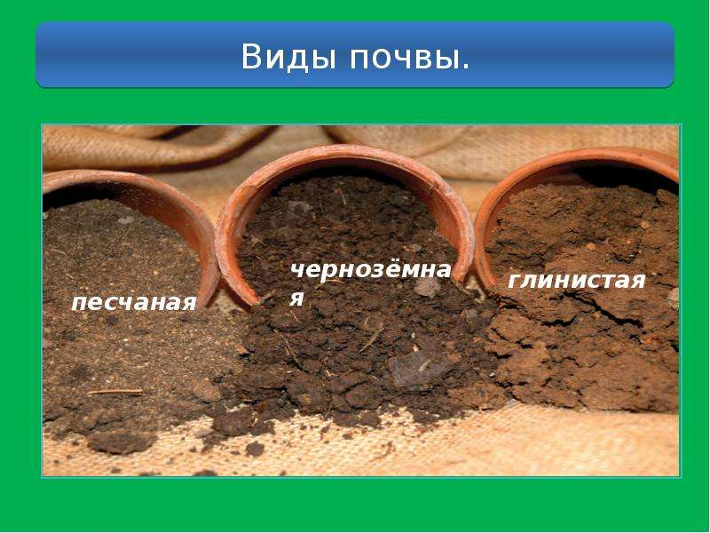 Как улучшить глинистую почву на участке