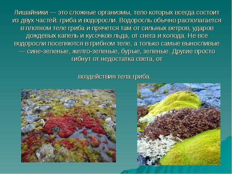 Эти своеобразные организмы в равной мере могут быть так и к особая группа симбиотических организмов