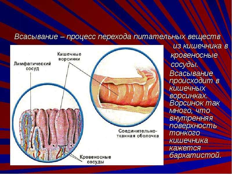 spermatozoidi-v-kishechnike
