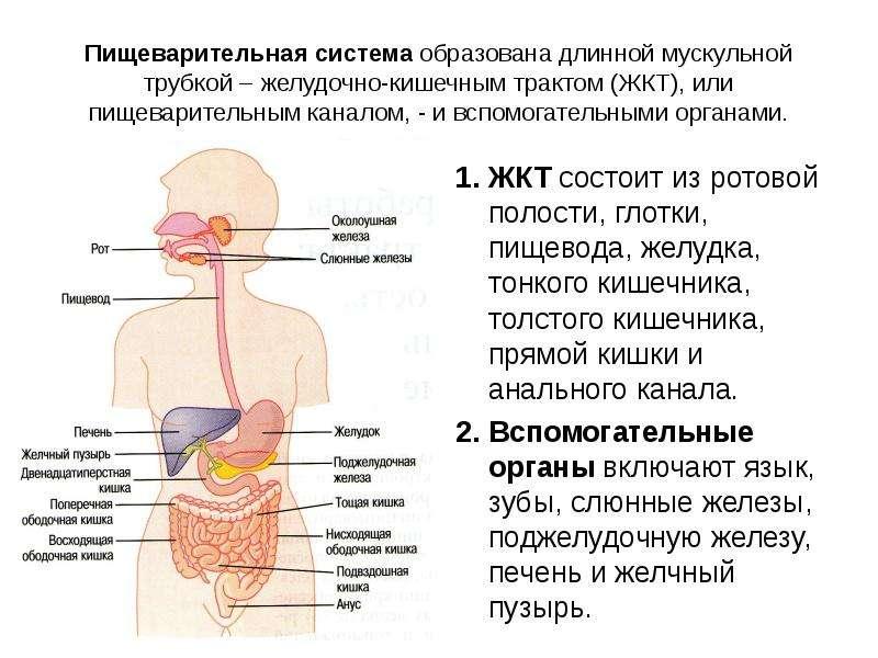 Как лечить желудочно кишечный тракт в домашних