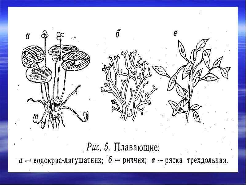 О какой экосистеме мы говорили на прошлом уроке?, рис. 11