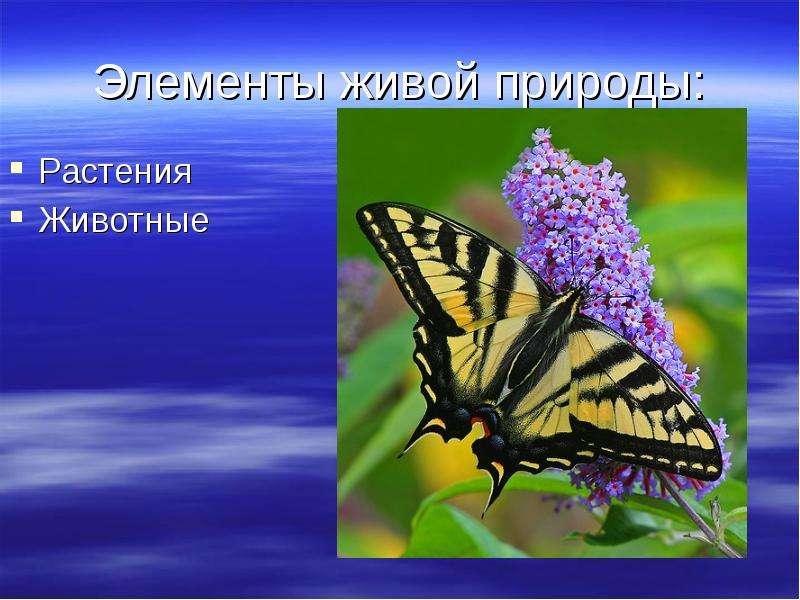 Элементы живой природы: Растения Животные