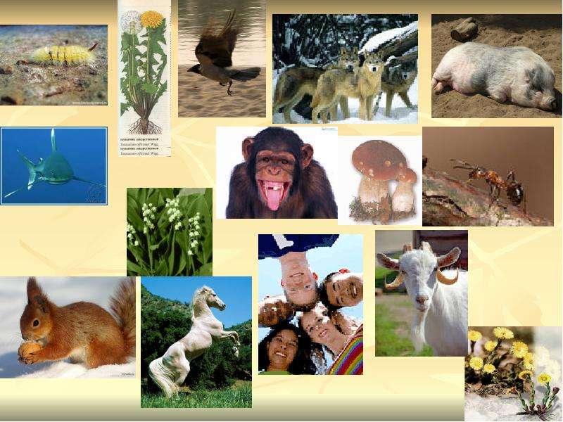 На тему Организм и его свойства, слайд 8