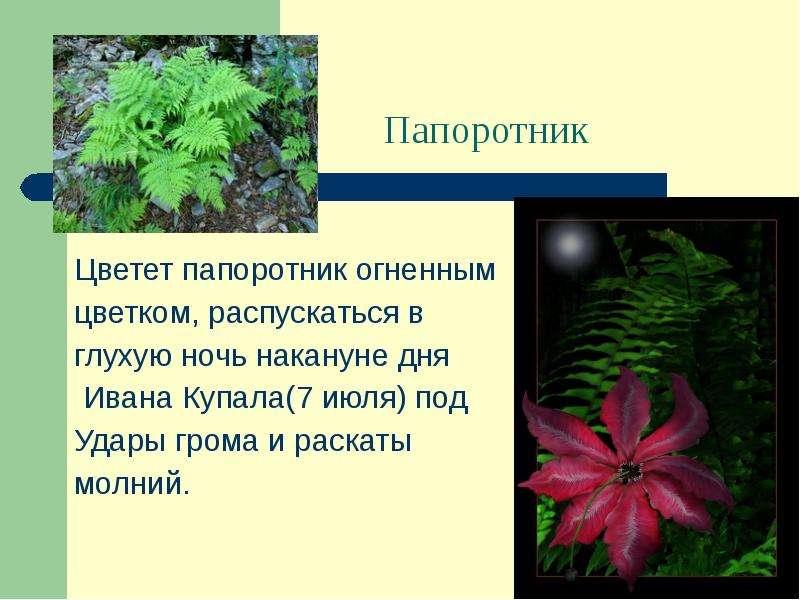 Папоротниковые цветы