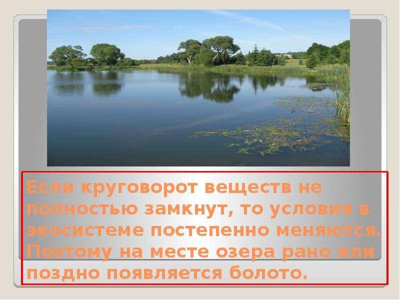 Экосистема Озера Презентация Окружающий Мир 3 Класс