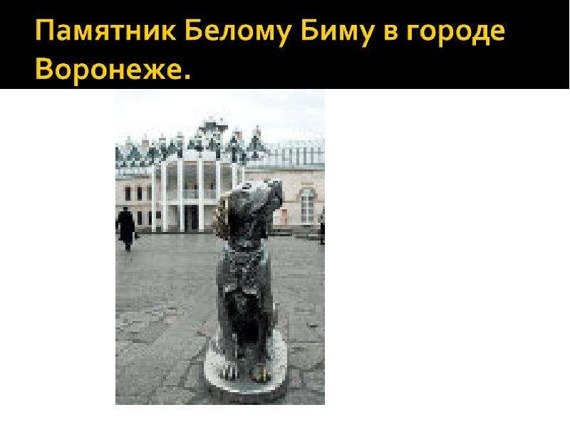 Читательская конференция по повести Г. Н. Троепольского «Белый Бим Черное Ухо», слайд 13