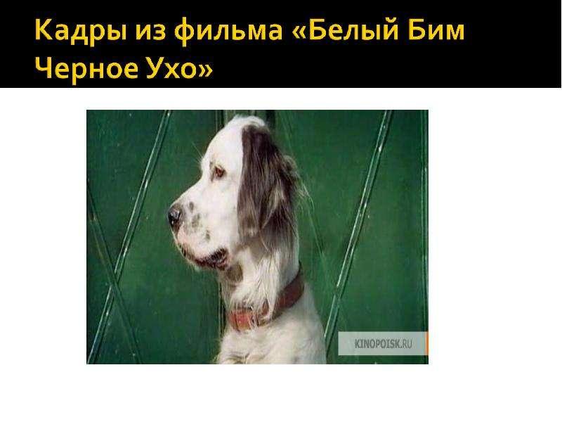 Читательская конференция по повести Г. Н. Троепольского «Белый Бим Черное Ухо», слайд 8