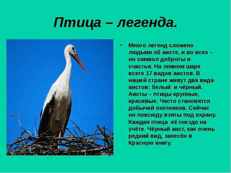 легенды о птицах с картинками жизнь пластические операции