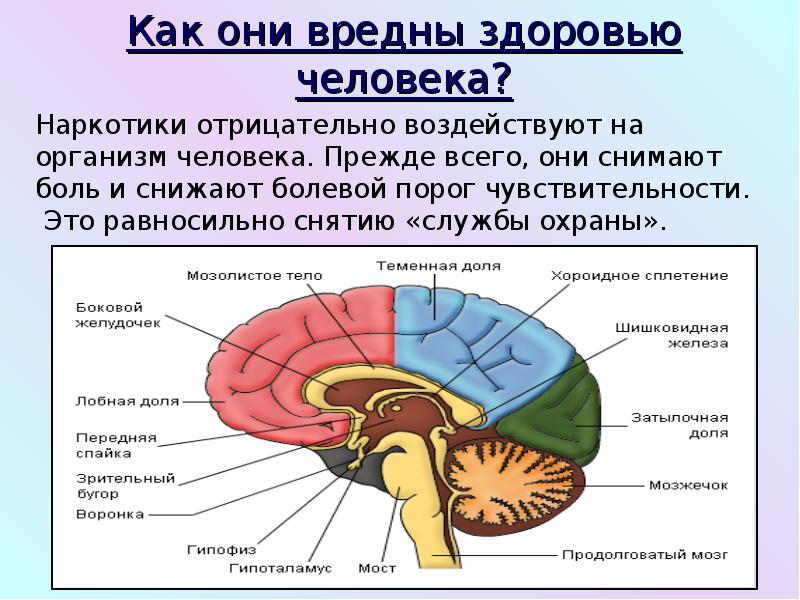 Наркотики и табак,их вред для здоровья человека, слайд 6
