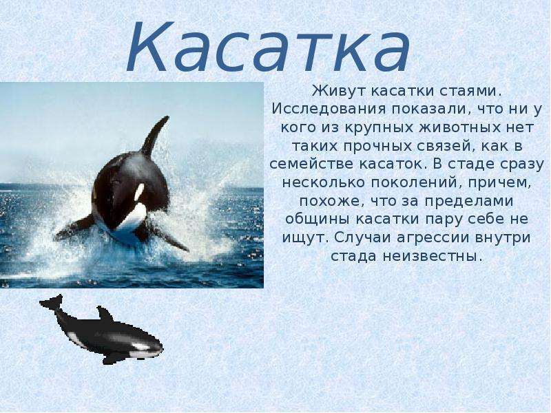 Презентация на тему Животные в Арктике - скачать презентацию 2b95e6b3cab