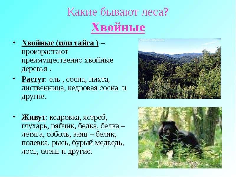 какие виды сосен растут в россии