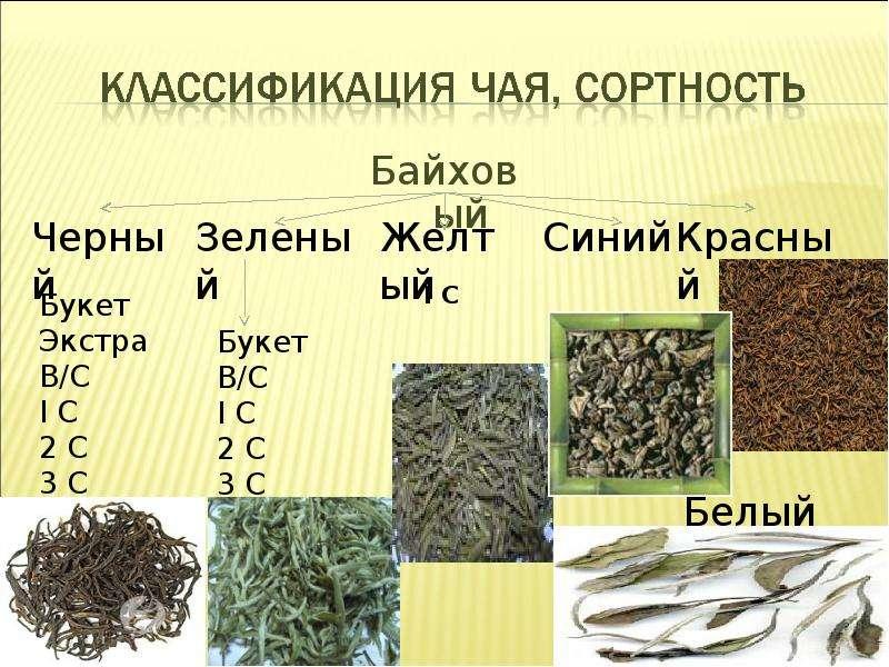 classification of tea