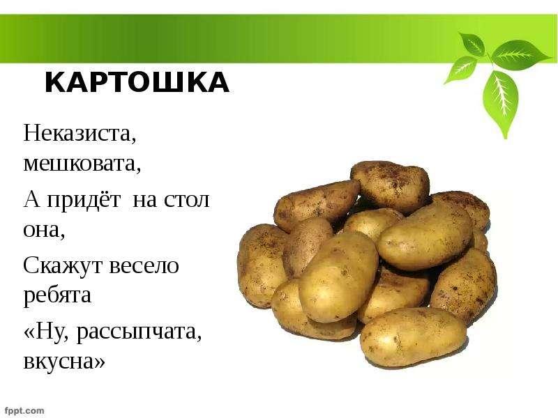 Открытка про картошку 94