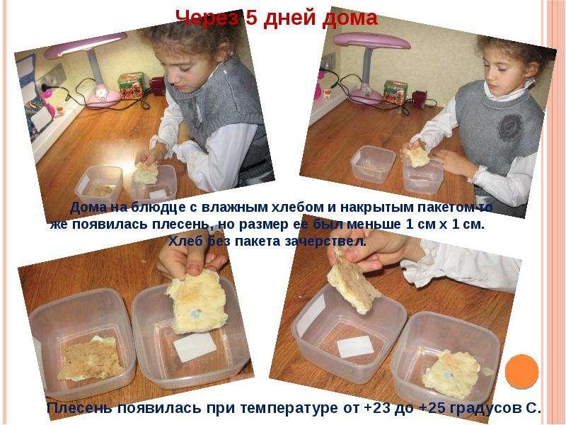 Как вырастить плесень в домашних условиях на хлебе