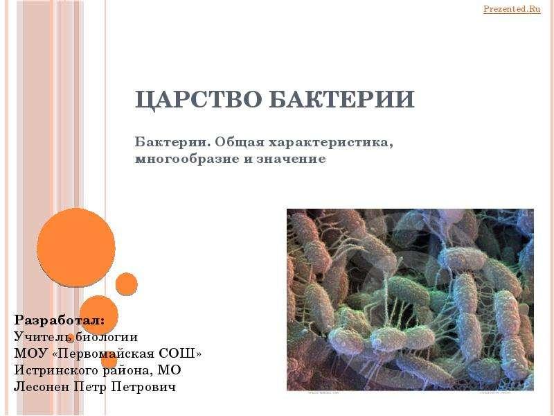 Презентация царство бактерий
