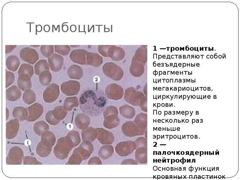 От чего падают тромбоциты в крови у беременных