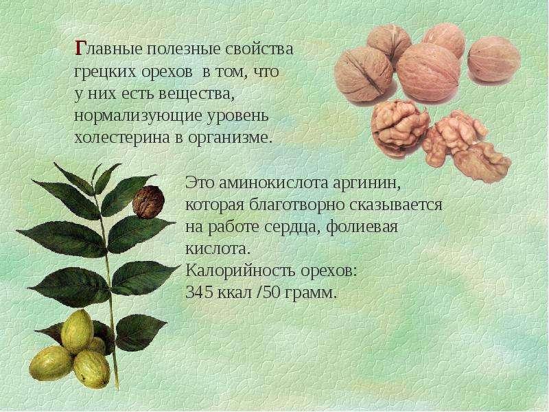 о пользе грецких орехов ответственным электрохозяйство