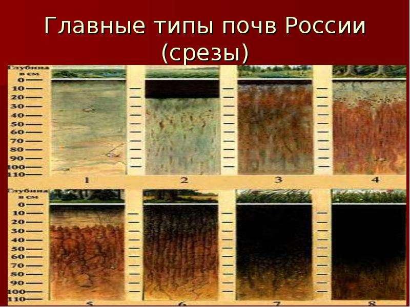 Почвы россии картинка
