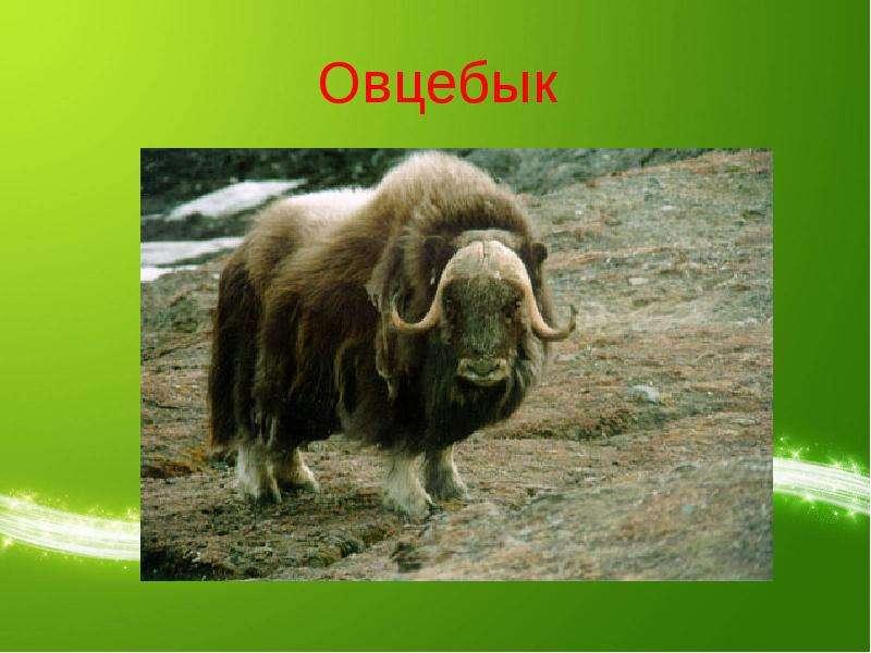 http://mypresentation.ru/documents/25a2d79aa826114eb1ddef9b30c8d892/img11.jpg