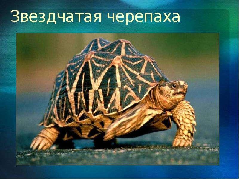 photos of single girls черепашки № 162552