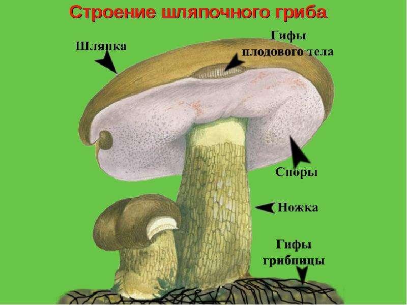 Сделать гриб для школы
